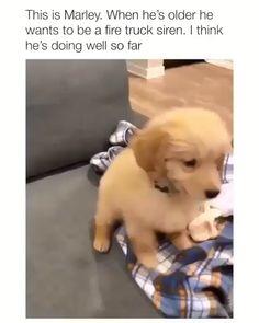 Funny Animal Jokes, Funny Dog Memes, Funny Dog Videos, Funny Riddles, Animal Puns, Animal Facts, Animal Humor, Cute Funny Dogs, Cute Funny Animals