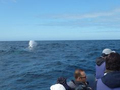 #azores @KBCPR #bucketlist whale watching in the Azores, Portugal