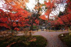 長岡天満宮 紅葉 見ごろ 京都