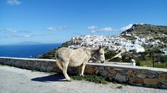 Camel, Greece, Island, Animals, Greece Country, Animales, Animaux, Camels, Islands