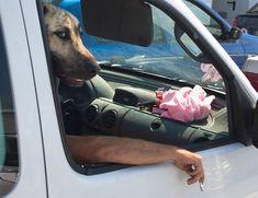 28 fotos de cachorros capturadas no timing perfeito | Estilo