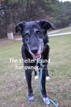She Searched Desperately For An Owner Who Didn't Want Her Back