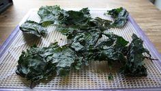 Chip de Kale au désidrateur vraiment miam miam