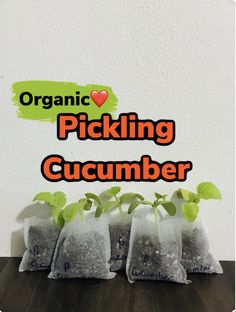 Cucumber Trellis, Cucumber Plant, Growing Plants Indoors, Growing Vegetables, Okra Plant, Bean Plant, Buy Plants Online, Pickling Cucumbers, Grow Your Own Food