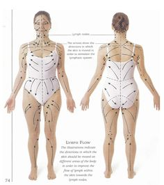 Lymph drainage pattern for skin brushing effectively as explained by Brandi Owens in youtube video.