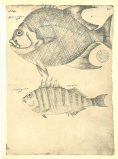 Fishes Vintage Print  Sketch Drawing Maranhao Brazil by carambas, $16.00