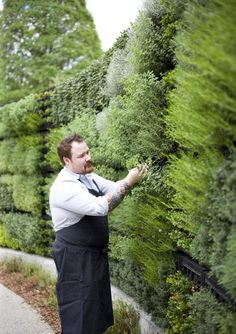 the wall of herbs (Atlanta Botanical Garden)
