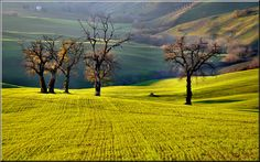 Le Marche Countryside by Luigi Alesi