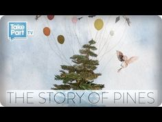 The Story of Pines from Alison Sudol |  Such a precious little film and wonderfully creative. <3