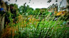 Rainy afternoon - The Honey Badger of West London http://www.sheawong.com/rainy-afternoon/ #spider #spiderweb