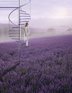"""""""Most of our healing occurs during quiet moments of rest when we are in contact with unconscious feelings and experiences. I can't imagine life without the peaceful, insightful moments I have during meditation. Champs, Lavender Fields, Lavander, Land Of Enchantment, Pastel Purple, Lilac, Quiet Moments, Stairway To Heaven, Photography Portfolio"""