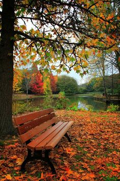 Autumn Arrives. I can picture myself sitting there reading a book.