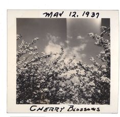 Little White Horse on We Heart It Cherry Blossom Girl, Cherry Blossoms, Brooklyn Baby, Lost In Translation, Sylvia Plath, Photo Journal, Little White, Aesthetic Vintage, Vintage Photographs
