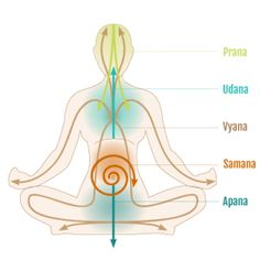 Five currents of prana and how they organize your physiology