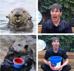http://redscharlach.tumblr.com/ the bucket-otter will always be the best gif