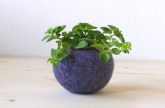 I present you the pod    A little cozy felt ball, perfect for your succlent and air plants.    An organic pod shape to warm your tiniest green