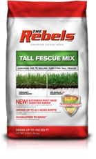 The Rebels - Tall Fescue Grass Seed