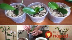 Usually the Phalaenopsis prefers to breed in the spring / Amazing Handmade Handicraft, Indoor Plants, Planter Pots, Spring, Amazing, Handmade, Crafts, Gardening, Housekeeping