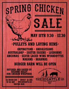 Image from http://www.huntercattle.com/wp-content/uploads/spring-chicken-sale.jpg.