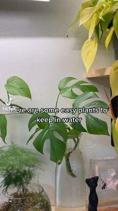 Inside Plants, Room With Plants, House Plants Decor, Plant Decor, Planting Succulents, Garden Plants, Indoor Plants, Planting Flowers, Plants Grown In Water