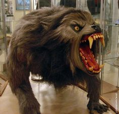 Rick Baker won the first-ever makeup artistry Oscar for werewolf effects on writer/director John Landis's 1981 horror/comedy. Groundbreaking then, still brilliant today. Classic Horror Movies, Horror Films, Horror Art, Creepy Horror, Horror Icons, Of Wolf And Man, American Werewolf In London, Werewolf Art, The Blues Brothers