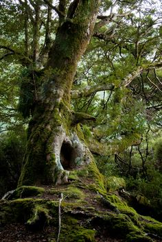 Find images and videos about nature, tree and forest on We Heart It - the app to get lost in what you love. Mother Earth, Mother Nature, Dame Nature, Old Trees, Walk In The Woods, Tree Forest, Forest Fairy, Nature Tree, Plantation