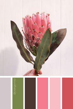 Color inspiration for wedding, home decor, design ideas. Follow me for more color palettes. #color #colorpalette #flower #protea #wedding #homedecor #design