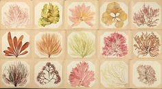What Victorian-era seaweed pressings reveal about our changing seas   Environment   The Guardian