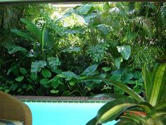 tropical landscaping around a pool