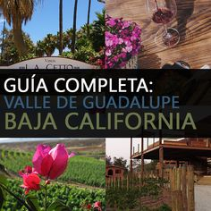 Guía Completa De Valle De Guadalupe, Baja California Baja California, Places To Go, Things To Do, Outdoor Decor, Plants, Wineries, Travel, Paths, Vacations
