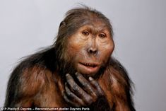 A mixture of human and yak hair is used for hominids such as Paranthropus boisei, who lived in Eastern Africa during the Pleistocene epoch from about 2.3 to 1.2 million years ago. Elisabeth Daynès.