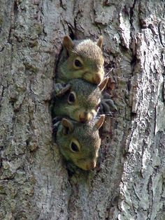 Squirrel Squash.