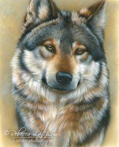 Dog Pencil Colors Drawing - Rebecca Latham