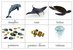 cartes de nomenclature MER : faune et flore French Alphabet, Robinson Crusoe, Montessori Education, Fauna, Under The Sea, Cute Pictures, Activities For Kids, Kindergarten, Homeschool