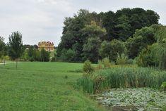 Hungary, Vineyard, Plants, Travel, Outdoor, Outdoors, Viajes, Vine Yard, Destinations