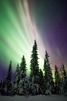 Aurora display over a snow covered paradise.