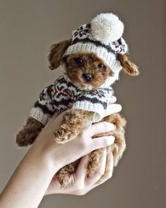 I want pretty: Lunes de cosas bonitas! / Random pretty stuff! #perro #lindo #dog #cute