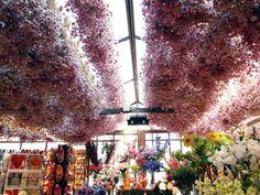 Bloemenmarkt, amsterdam, netherlands, floating flower market