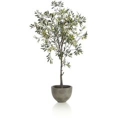 Convincing and carefree stand-in branches the graceful branches and lance-shaped slivery leaves characteristic of a real olive tree. Potted in a clean, rounded...