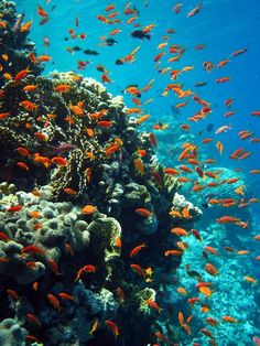 Sharm El Sheikh Tiran Straits - Gordon's Reef. Red Sea off the coast of Egypt. I scuba dived this.... :)