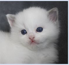 My little Cotton