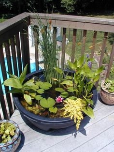 Mini pond in a pot...I love this!