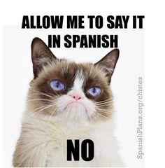 Grumpy Cat in Spanish meme in spanish Spanish Teacher Memes Memes Humor, Class Memes, Teacher Memes, New Memes, Funny Memes, Hilarious, Funny Captions, Teacher Tools, Funny Gifs