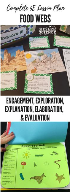 food webs 5e lesson plan ready to print and teach the entire ecosystems unit includes