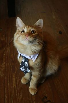 cats in ties | Tumblr