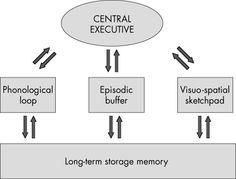 Baddeley's Working memory model