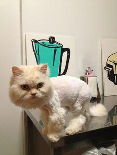Baby got a haircut.