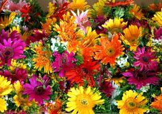 Photo colourful flowers by Samuel Johnson on 500px