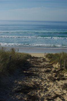 plage, sable, dune, sentier, océan, mer, paysage, les Landes, france