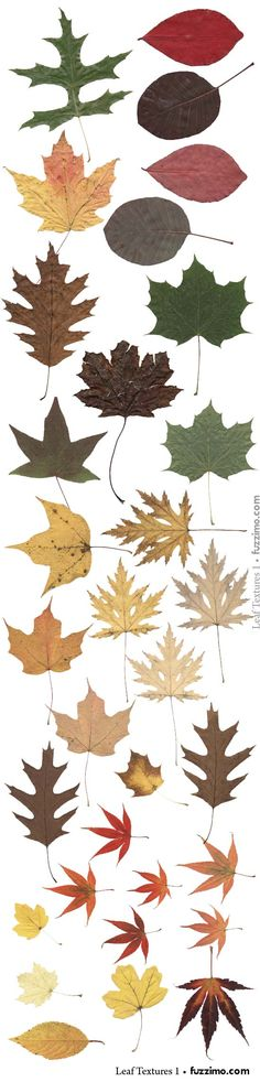 Free leaf vector images from Fuzzimo.- I've used Fuzzimo before and their images are very high quality                                                                                                                                                                                 More